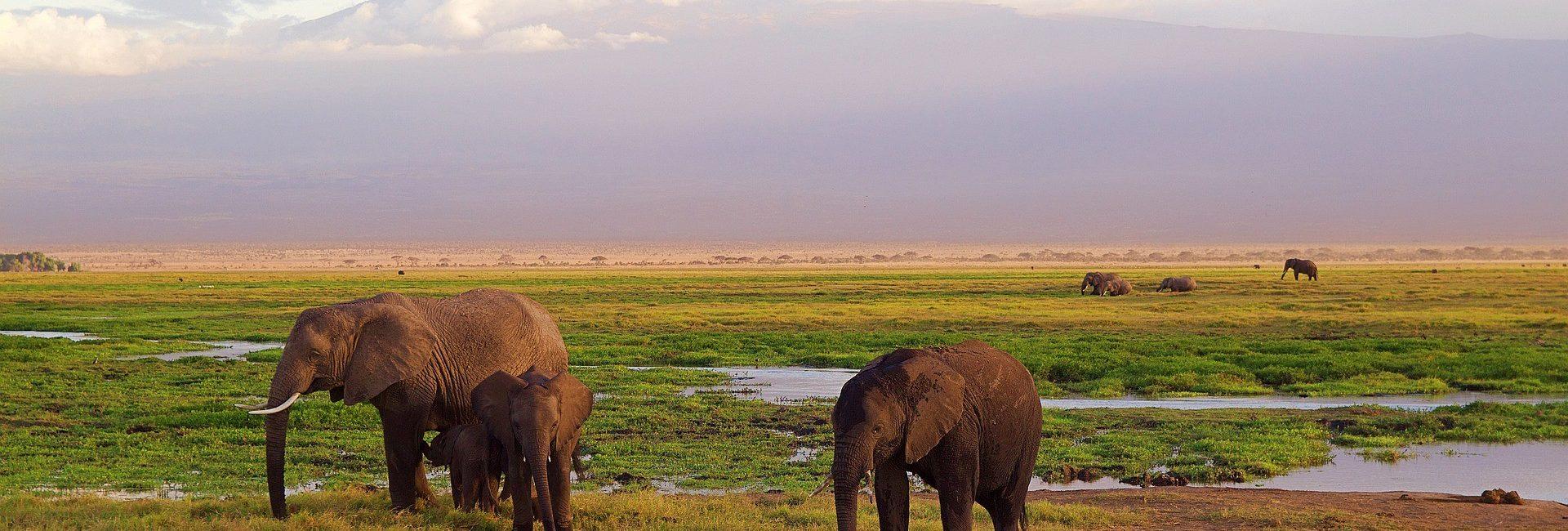 safari-cudesni-svijet-maasaija-9021bcd5-8945-4fa2-8749-17bb28d79ace