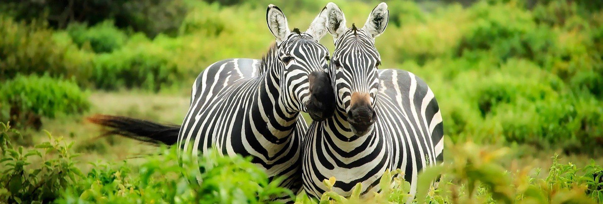 Kenija - putovanje u safari Maasa Mara