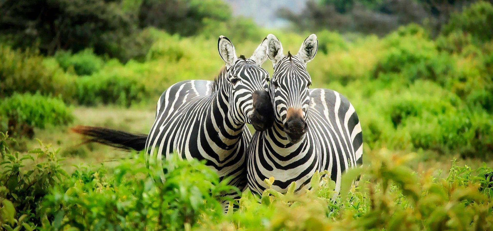 safari-cudesni-svijet-maasaija-9021bcd6-3874-41e4-9331-dee7f4c3023b