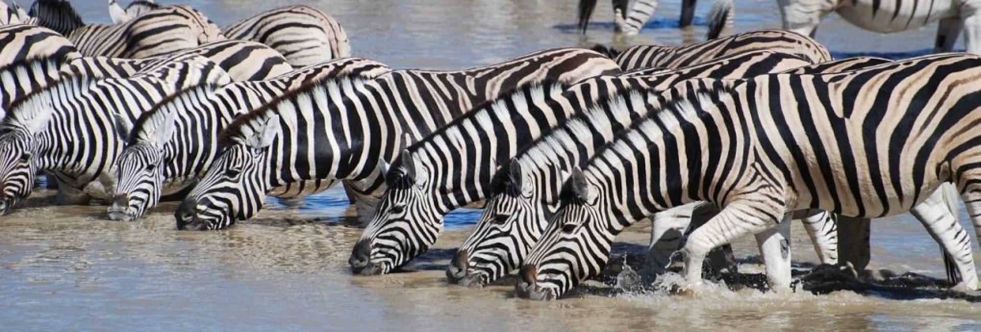 Tanzanija - putovanje u afričku divljinu